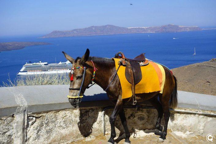 Un âne sur la remontée vers Fira