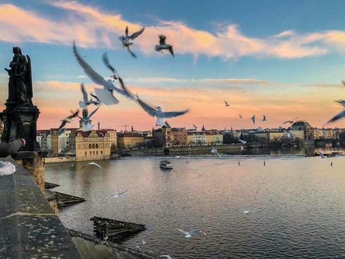 Mouettes du pont Charles à Prague
